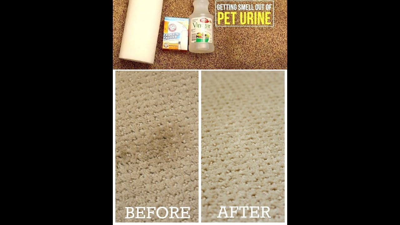 Dog Urine From Carpet With Vinegar