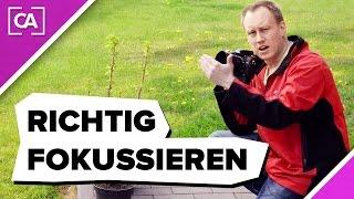 Richtig fokussieren für scharfe Bilder - caphotos.de