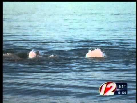Great White Shark Spotted by a Cumberland Family