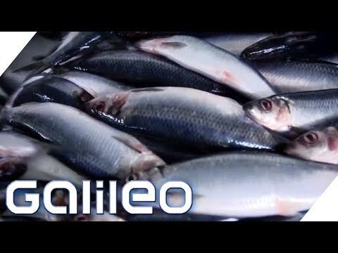 Zu Besuch in der größten Fischfabrik Europas   Galileo   ProSieben