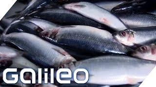 Zu Besuch in der größten Fischfabrik Europas | Galileo | ProSieben