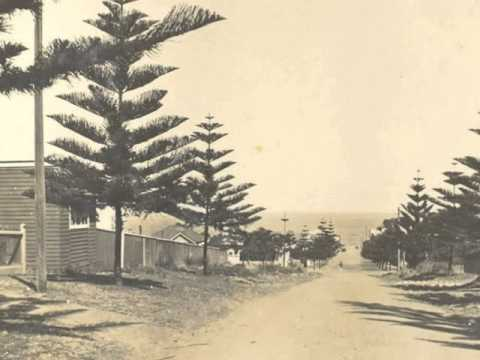 Norfolk Island Pines