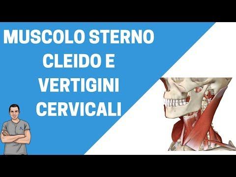 Sterno cleido mastoideo: un muscolo importante nelle vertigini cervicali