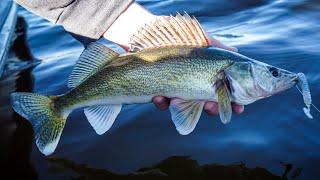 Spring Walleye Fishing with Plastics! (Fox River)