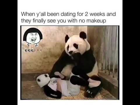 Panda dating