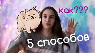 Как уговорить родителей купить собаку?!/5 способов