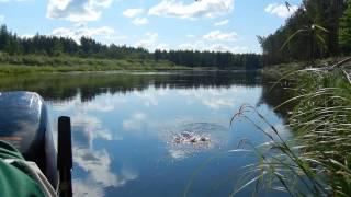 Рыбалка, один день отдыха, ловля щуки спиннингом, плотва удочка на опарыша  ....(С братом один день на рыбалке со спиннингом и удочкой . Хорошая щука нас не очень баловала своими выходами...., 2014-07-09T08:12:48.000Z)
