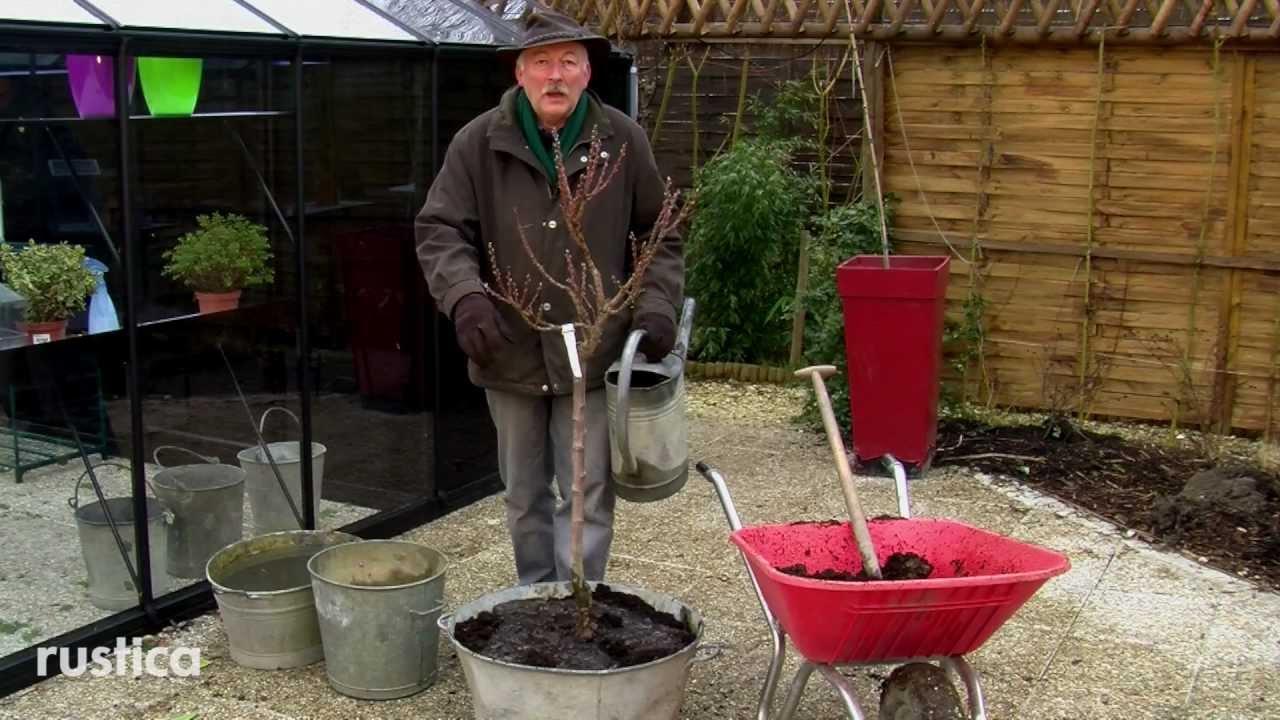 Planter un p cher nain en pot youtube - Arbre en pot ...