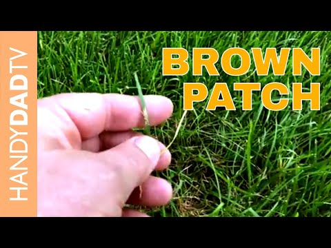 Brown Patch / Dollar Spot Treatment | Lawn Care 2018