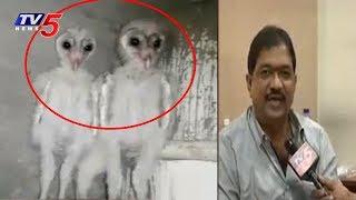విశాఖలో వింత పక్షులు..! | Strange Birds In Visakhapatnam | TV5 News