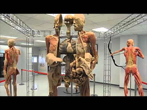 ห้องข่าวTheNation-ห้องเรียนร่างกายมนุษย์