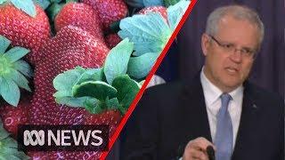 Strawberry crisis: