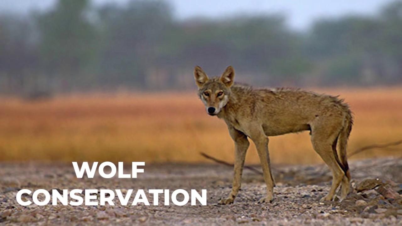 VNC - Vidyanagar Nature Club | Voluntary Nature Conservancy