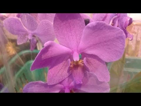 Обзор орхидей из Бауцентра/Краснодар/