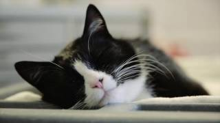 Therapy Cat 'Duke Ellington' Visits the ICU