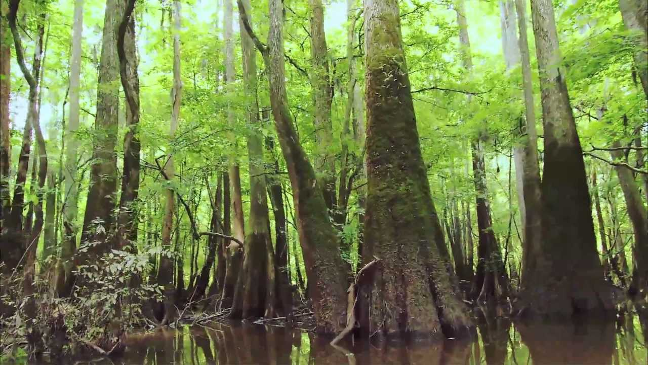 Image result for CONGAREE NATIONAL PARK