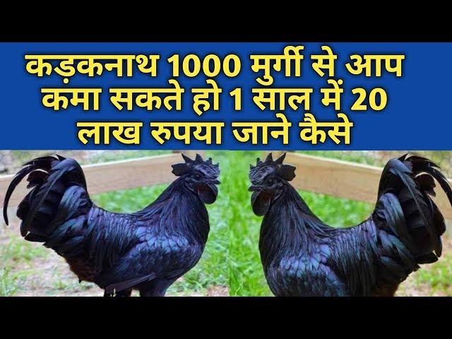 how to start kadaknath poultry farm