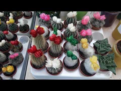 Комнатные цветы. Цветочный магазин- райское наслаждение