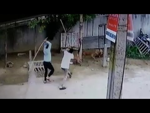Duo booked for killing and maiming dogs in Ghaziabad