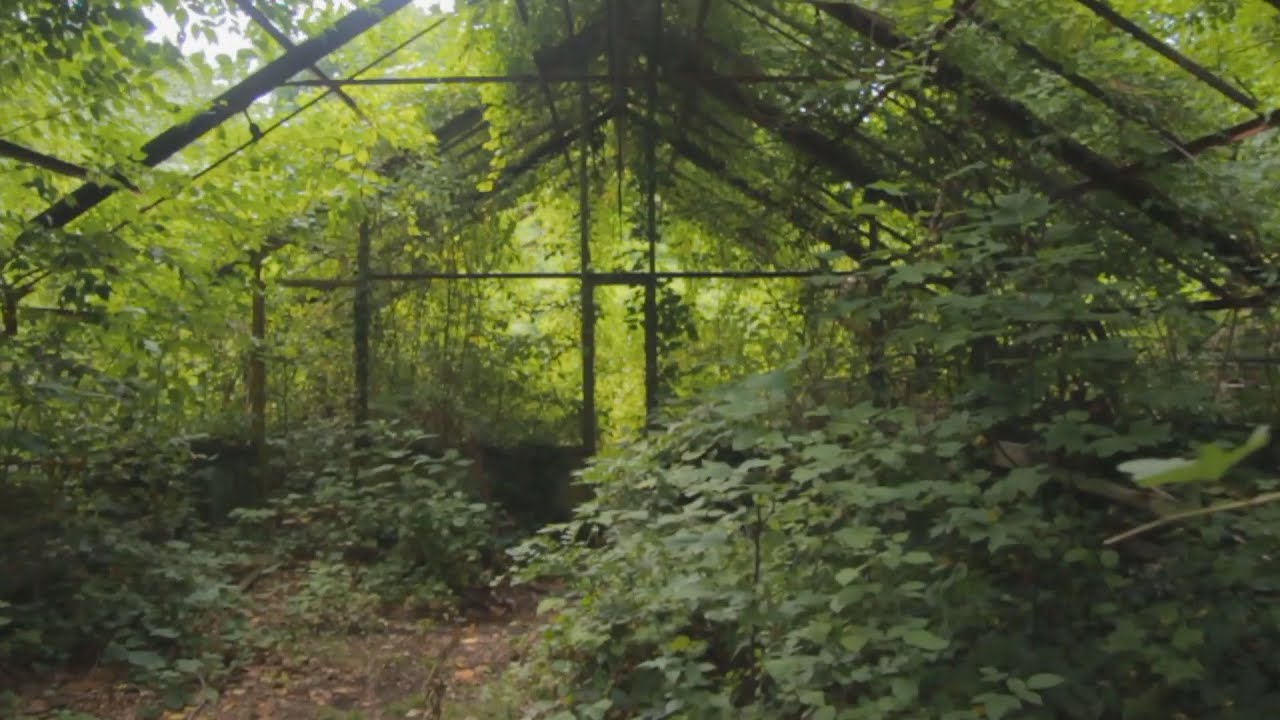 101 year old pratt greenhouses abandoned glen cove ny for Classic house green street
