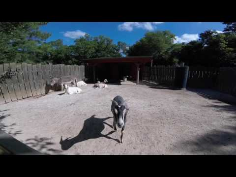 Dickerson Park Zoo Springfield MO