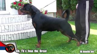 Ch. Tk's Ivan The Great