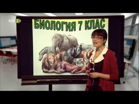 """7. клас: """"Клас бозайници"""", урок по БНТ, представен от г-жа Албена Йочкова, преподавател в 31 СУЧЕМ"""