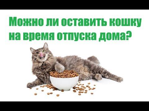 Можно Ли Оставить Кошку На Время Отпуска Дома / Как Долго Кошка Может Жить Одна / Био-Вет