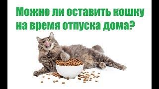 Можно Ли Оставить Кошку На Время Отпуска Дома&Как Долго Кошка Может Жить Одна. Ветклиника Био-Вет