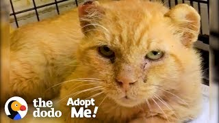 Feral Cat Goes From Hissing To Purring | The Dodo Adopt Me!