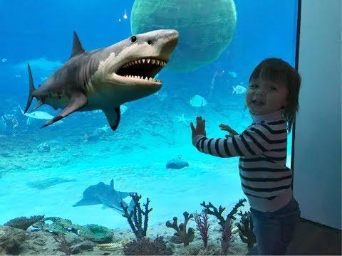 Океанариум с Акулами ВЛОГ для детей Увидели рыбку Немо и ДОРИ Vlog