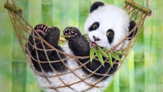 11 Cute Wild Animals That can Kill You  | Deadly Animals