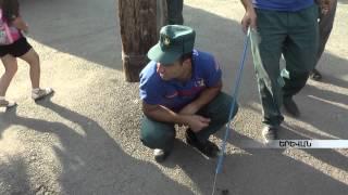 Ինչպես վարվել օձ տեսնելիս ու տարբերել թունավորին անվնասից armeniatv.am