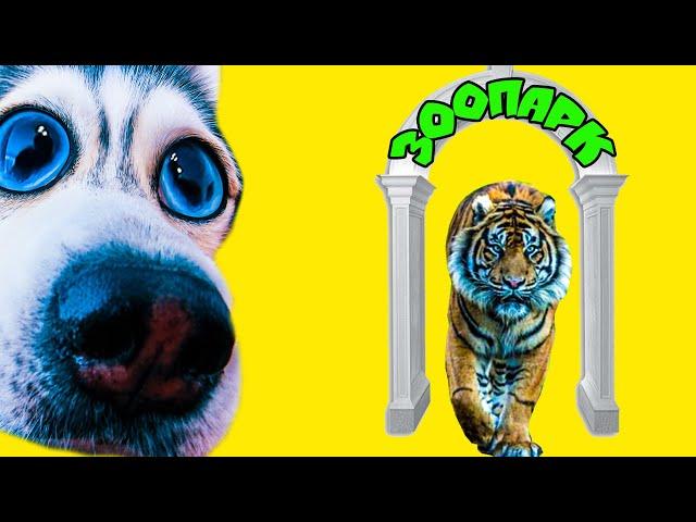 БУНТ В ЗООПАРКЕ!! (Хаски Бандит) Говорящая собака