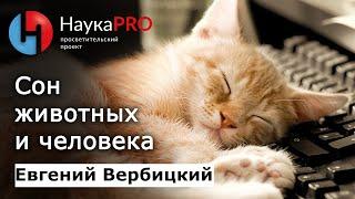 Евгений Вербицкий - Сон животных и человека