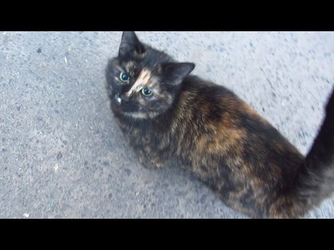 Tortie cat lives on the street again