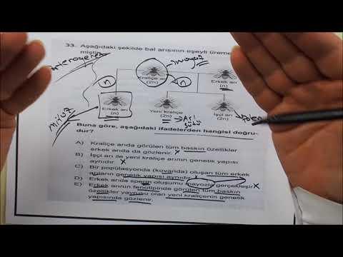 AYT Biyoloji Sınav Öncesi Çözülmesi Gereken Sorular