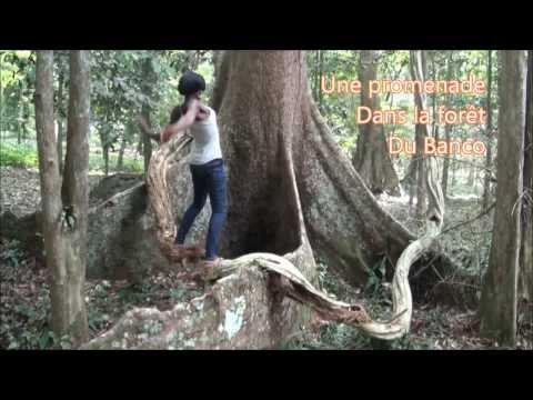 Sunday walk in Banco rainforest / Promenade dans la forêt du Banco, Abidjan, Côte d'Ivoire