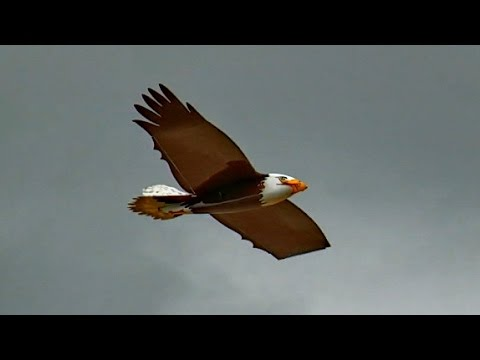 RC BIRD BALD EAGLE RC VOGEL ADLER / Meeting Bölsdorf 2015 *1080p50fpsHD*