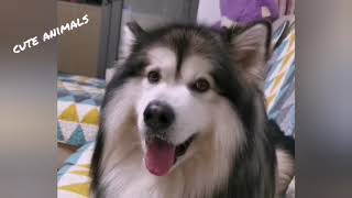 Funny And Cute  Puppies Compilation - Cutest Cats Dogs Pandas