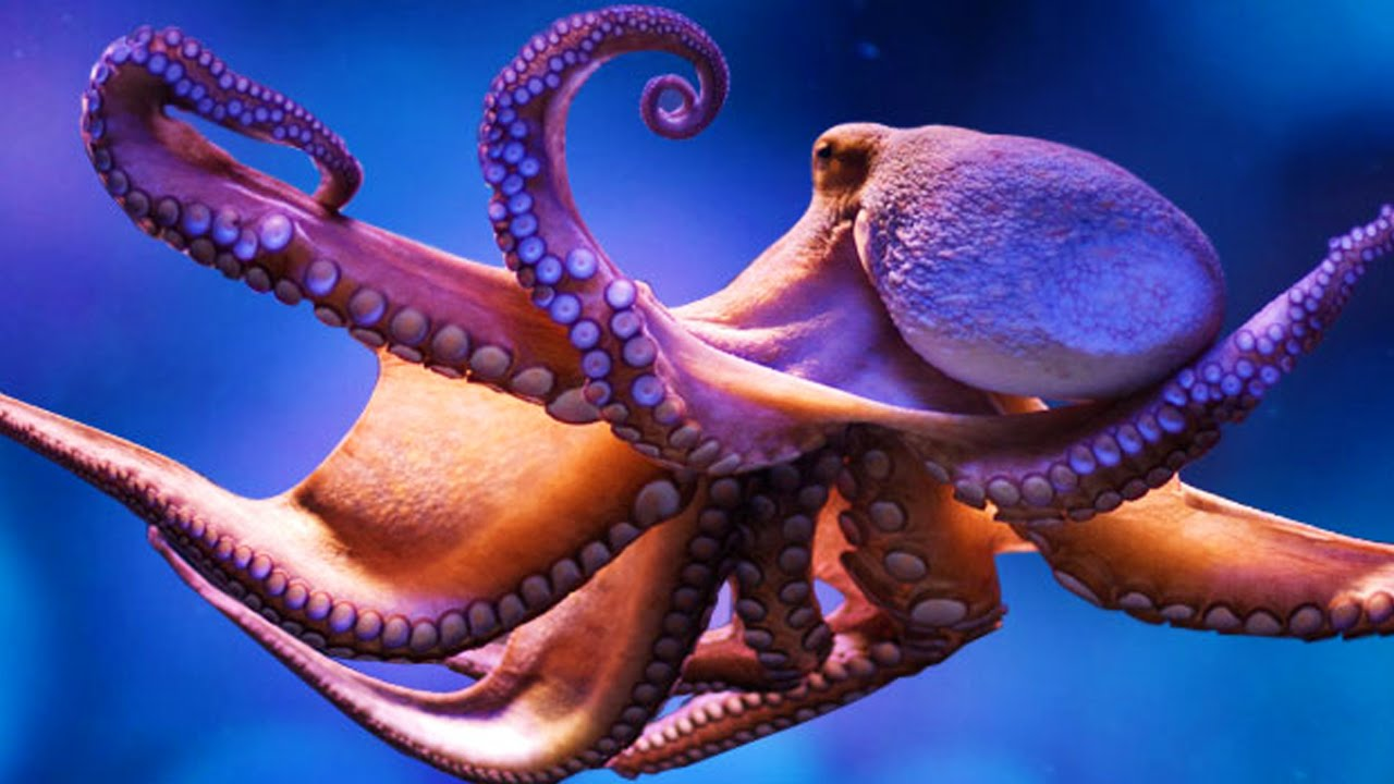 Cool Octopus Art Octopus Lessons Tes Teach