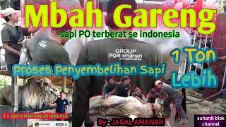 Download Sapi Terberat di indonesia || Mbah Gareng akhirnya di sembelih untuk Qurban