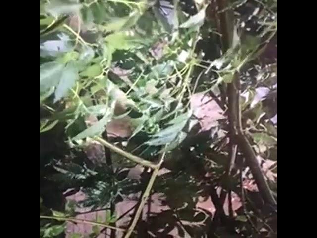Perrito bajo la lluvia en azotea