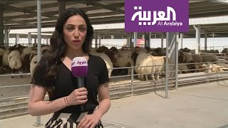 نشرة الرابعة | ارتفاع أسعار الأضاحي في الكويت يتحول إلى مادة فكاهية على منصات التواصل