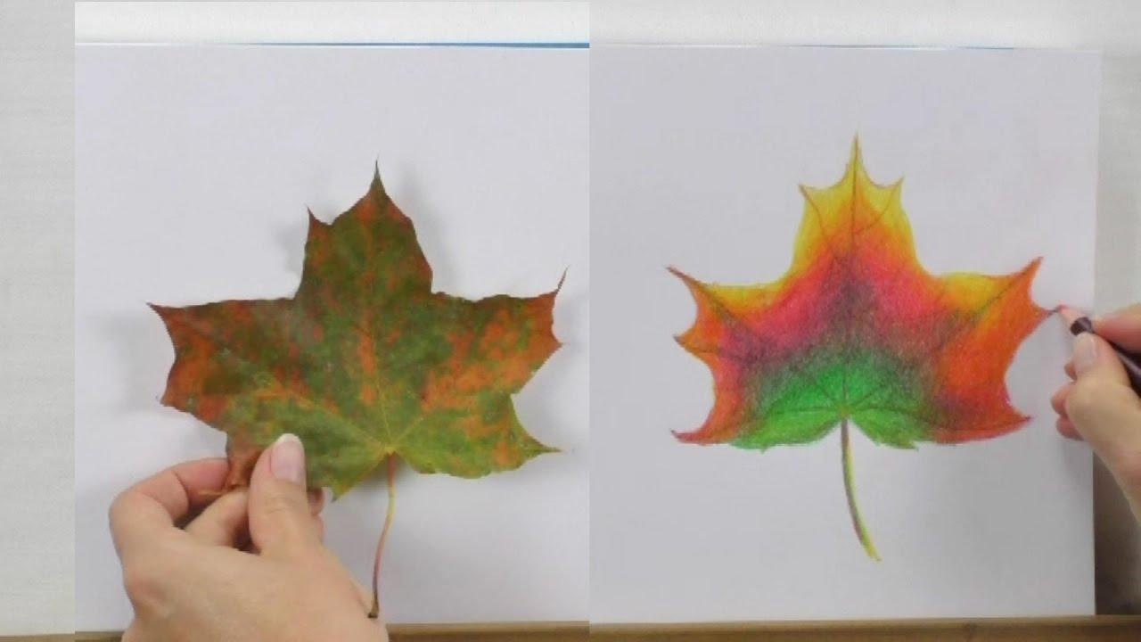 Zeichnen Fur Zwischendurch Herbstblatt Mit Buntstiften Youtube