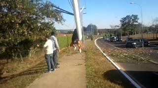 Baixar Acidente - Asa Delta - Brasília.mp4
