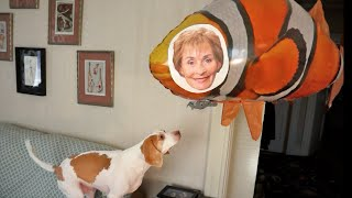 Dog vs. Judge Judy Balloon: Funny Dog Maymo