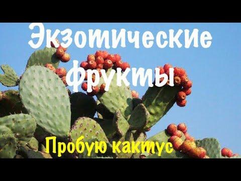 Видеообзор: Пробую кактус / Как есть кактус/ Опунция