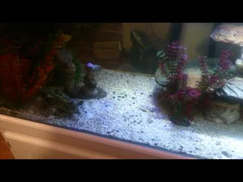 How To Stop Cichlids From Always Hiding!