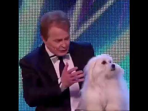 Talking Dog Act : Dogs got talent in america's got talent